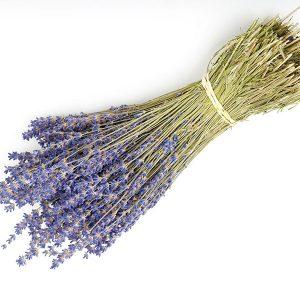Wholesale Dried Lavender Bunch