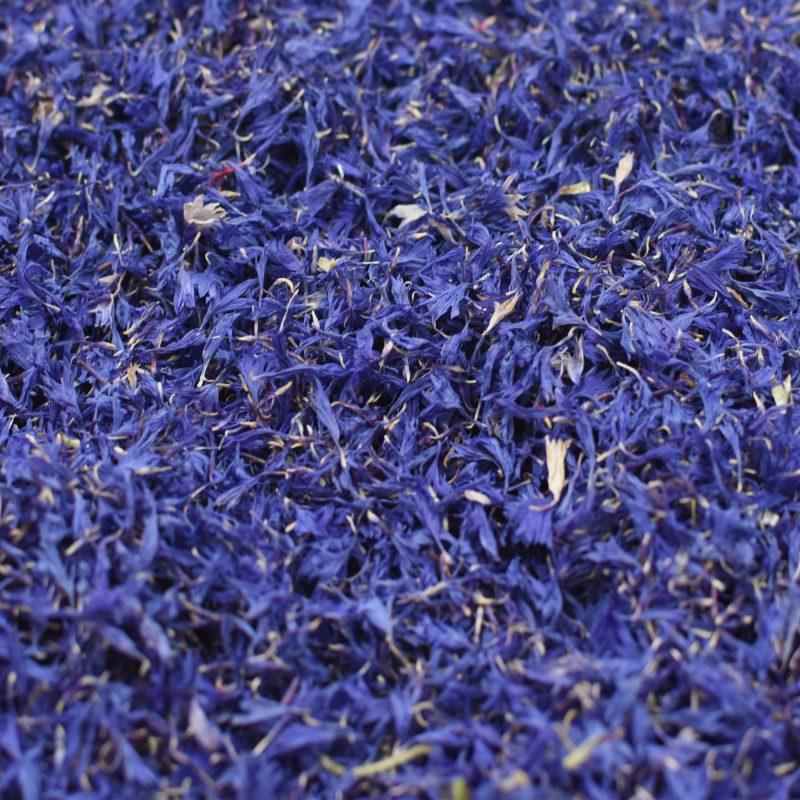 Blue Cornflower Petals