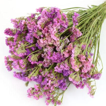 Wholesale Dried Flower Purple Statice | Sea Lavender