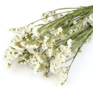Wholesale Dried Flower White Statice   Sea Lavender