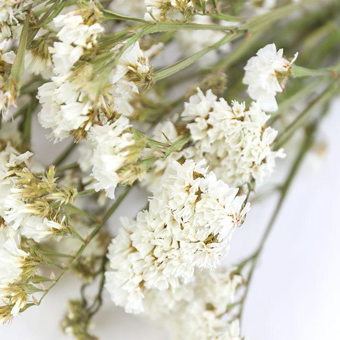 Wholesale Dried Flower White Statice | Sea Lavender