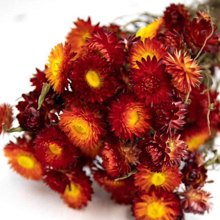 Red Helichrysum Bunch