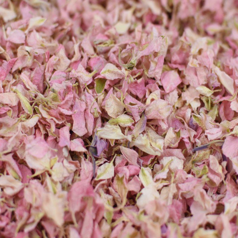 Light Pink Delphinium Petals