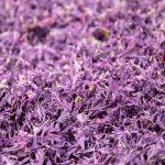 Lilac Cornflower Petals