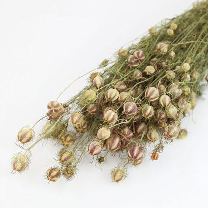 Wholesale Dried Flower Nigella Pod