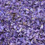 Purple Delphinium Petals