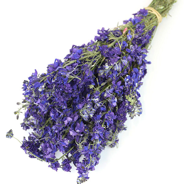 Dark Purple Delphinium Bunch