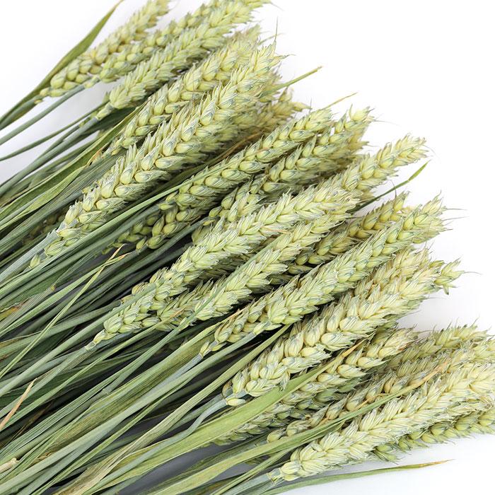 Wheat Bunch