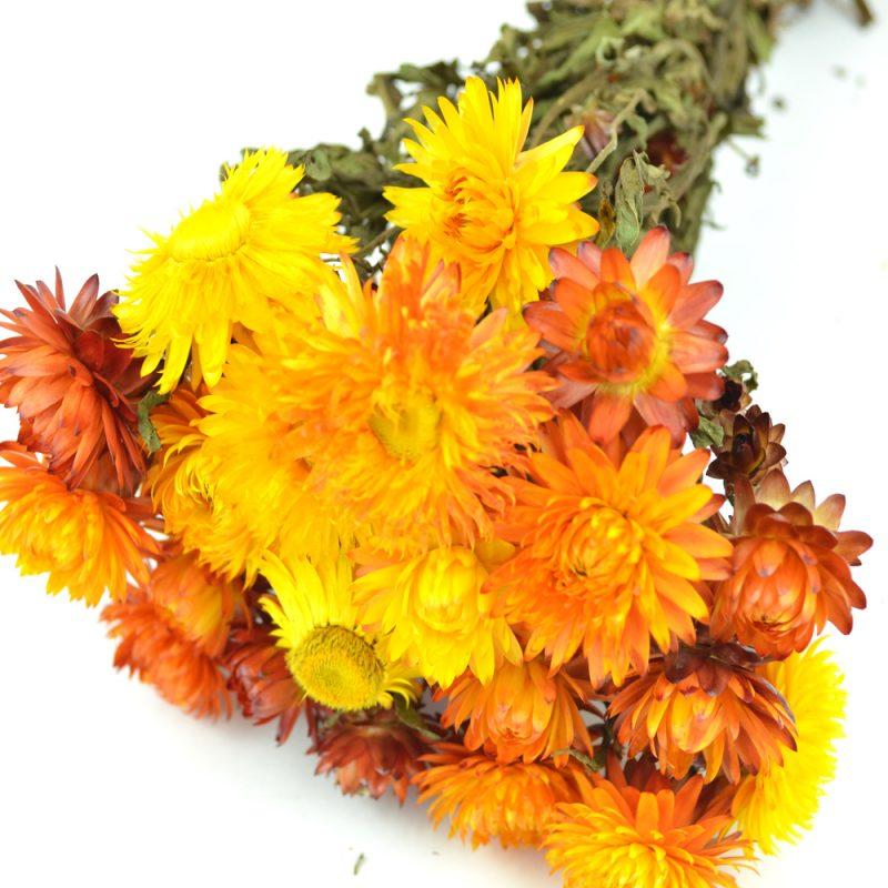 Orange Helichrysum Bunch