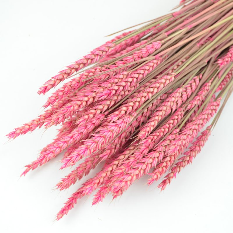 Pink Wheat Bunch (Dyed)