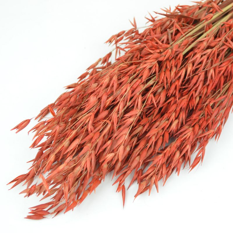 Red Oat Bunch (Dyed)