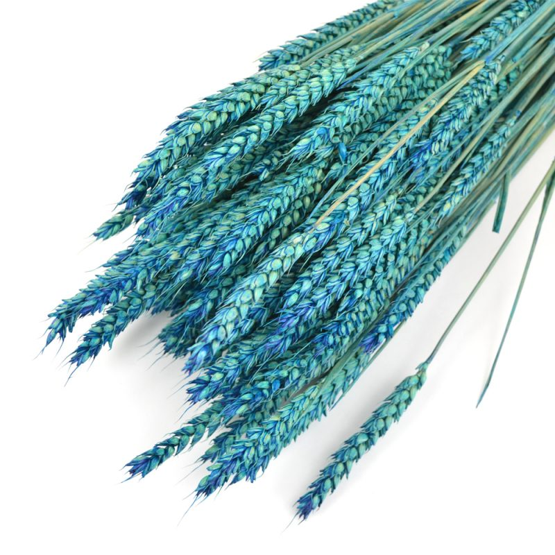 Blue Wheat Bunch (Dyed)