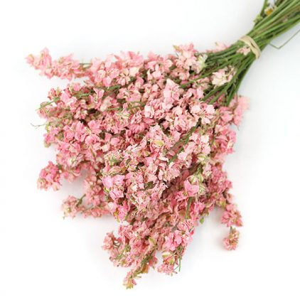 Dried Light Pink Delphinium Larkspur Bunch