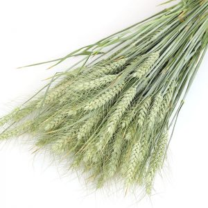 Wholesale Bearded Wheat Bunch for decoration