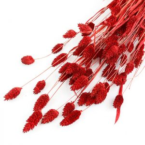 Wholesale Red Phalaris Dried Flower Bunch available from LSF Wholesale