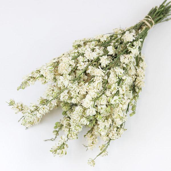 White Delphinium Bunch
