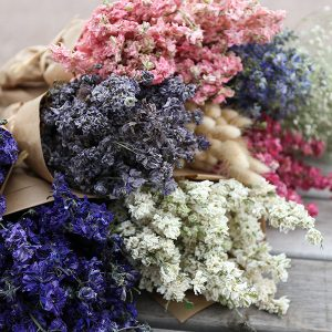 Wholesale Dried Flowers Available for Bulk Purchasing at LSF