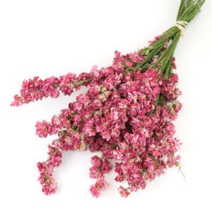 Wholesale Dried Flower Dark Pink Delphinium Bunch   Larkspur Dried Flowers